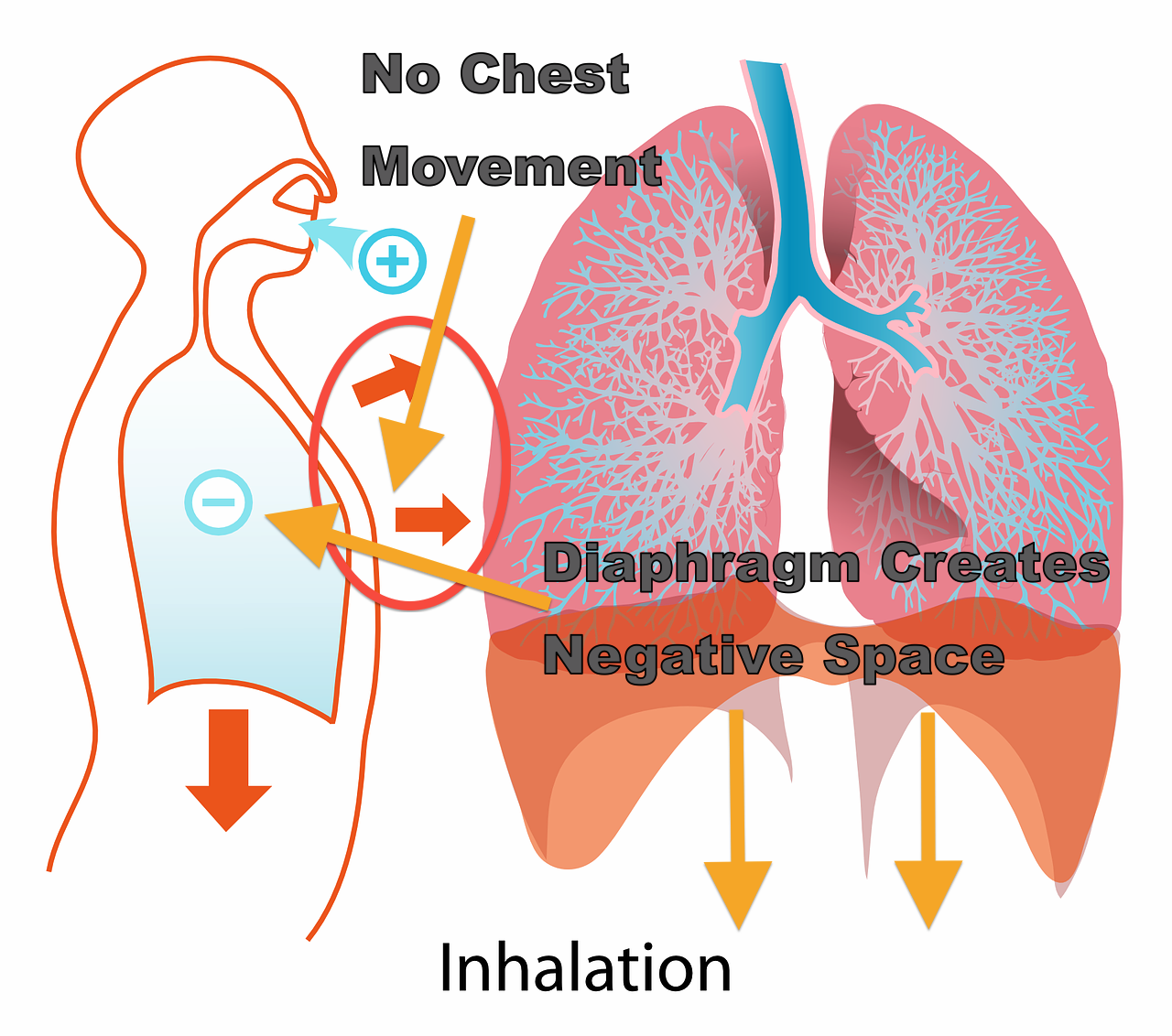 Breathing Exercises for Voice--Inhalation